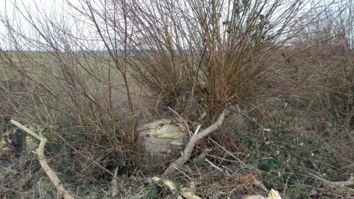 Aus Baum wird Busch